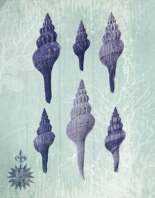Seashell Collection 2 c Digital Print by Fab Funky,Decorative