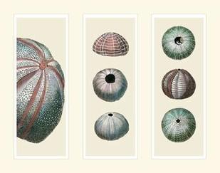 Sea Urchins on 3 Panels Digital Print by Fab Funky,Decorative