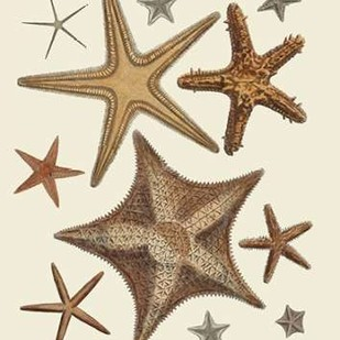 Starfish Collection 1 Digital Print by Fab Funky,Decorative