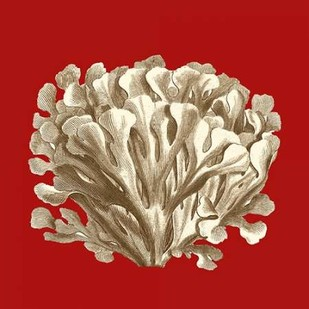 Small Coral on Red III Digital Print by Vision Studio,Decorative