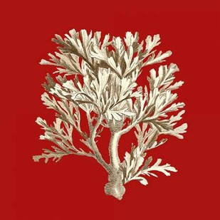 Small Coral on Red IV Digital Print by Vision Studio,Decorative