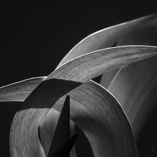 01 Kavadsa by Shailan Parker, Image Photography, Digital Print on Archival Paper, Gray color