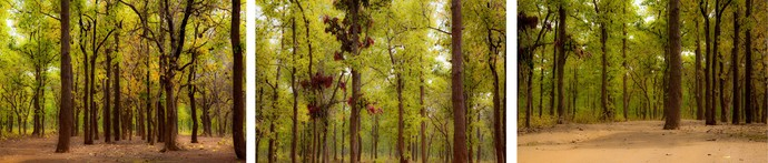 Lyrics of Tree-01 by Goutam Mukherjee, Digital Photography, Digital Print on Canvas, Green color
