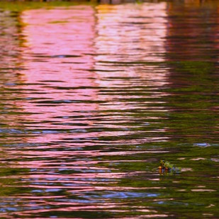 Waterline 10 by Saba Hasan, Image Photography, Digital Print on Archival Paper, Brown color
