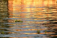 Waterline 8 by Saba Hasan, Image Photography, Digital Print on Archival Paper, Brown color