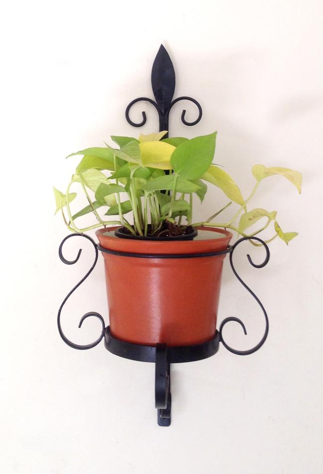 Veneto Wall planter Garden Decor By Studio Earthbox