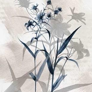 Indigo Bloom IV Digital Print by Butler, John,Decorative