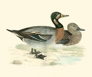 Morris Ducks III Digital Print by Morris,Decorative