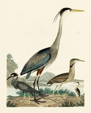 Heron Family I Digital Print by Wilson, A.,Decorative
