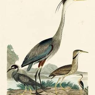 Heron Family I Digital Print by Wilson, A.,Decorative