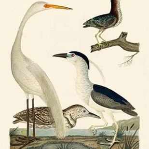Heron Family II Digital Print by Wilson, A.,Decorative
