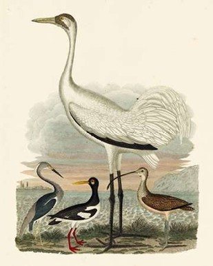Heron Family III Digital Print by Wilson, A.,Decorative
