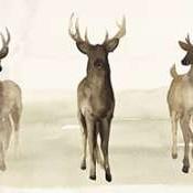 Deer Line I Digital Print by Popp, Grace,Impressionism