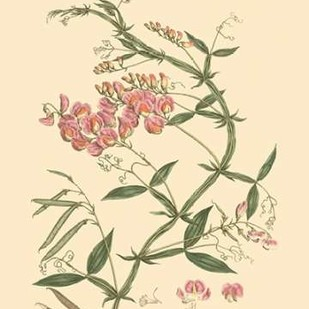 Blushing Pink Florals VI Digital Print by Miller, John,Decorative