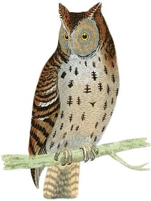Morris Mottled Owl Digital Print by Morris,Decorative