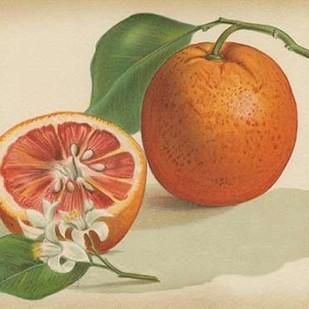 Orange Study I Digital Print by Unknown,Decorative