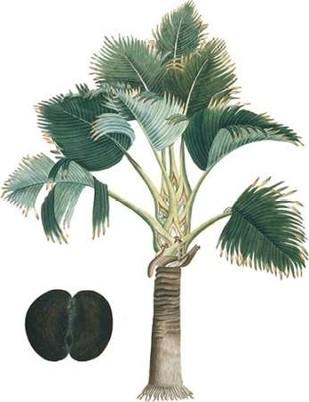 Exotic Palms III Digital Print by Vision Studio,Decorative