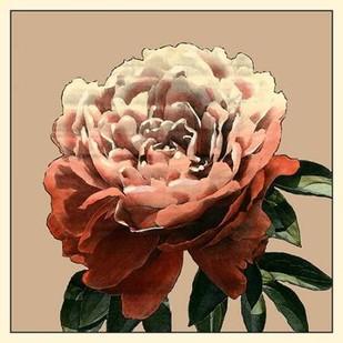 Heirloom Rose II Digital Print by Zarris, Chariklia,Decorative