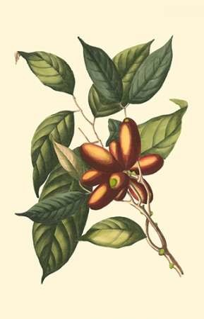Flourishing Foliage II Digital Print by Vision Studio,Decorative