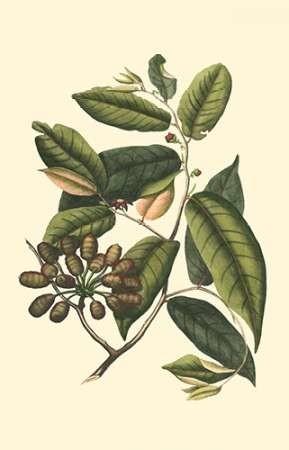 Flourishing Foliage III Digital Print by Vision Studio,Decorative