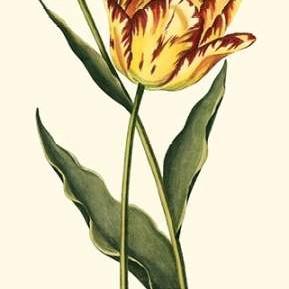 Vintage Tulips I Digital Print by Vision Studio,Decorative