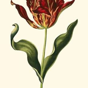 Vintage Tulips II Digital Print by Vision Studio,Decorative