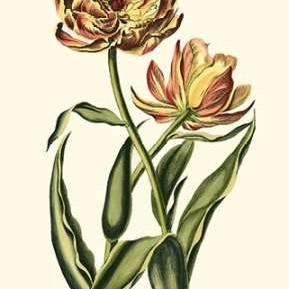 Vintage Tulips IV Digital Print by Vision Studio,Decorative