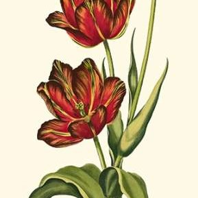 Vintage Tulips V Digital Print by Vision Studio,Decorative