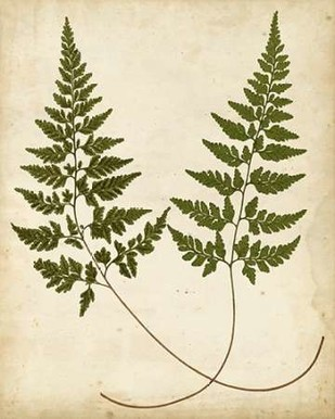 Fern Portfolio I Digital Print by Heath, Francis G.,Decorative