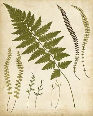 Fern Portfolio II Digital Print by Heath, Francis G.,Decorative