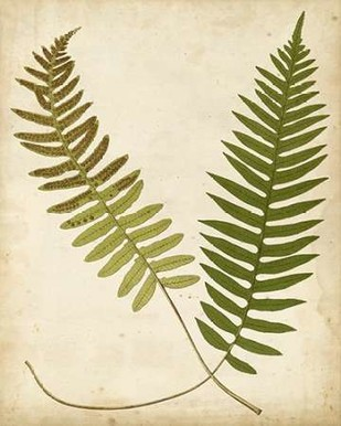 Fern Portfolio III Digital Print by Heath, Francis G.,Decorative
