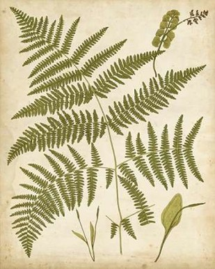 Fern Portfolio IV Digital Print by Heath, Francis G.,Decorative