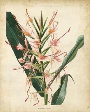 Tropical Delight III Digital Print by Edmonston-Douglas,Decorative