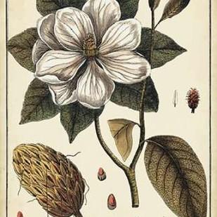 Ivory Botanical Study I Digital Print by Vision Studio,Decorative
