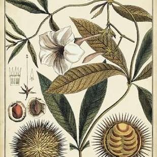 Ivory Botanical Study II Digital Print by Vision Studio,Decorative