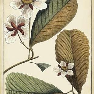 Ivory Botanical Study III Digital Print by Vision Studio,Decorative