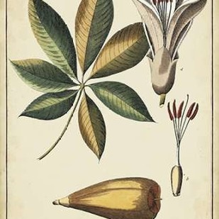 Ivory Botanical Study IV Digital Print by Vision Studio,Decorative