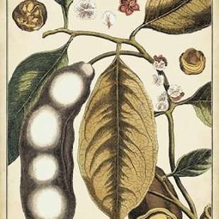 Ivory Botanical Study V Digital Print by Vision Studio,Decorative