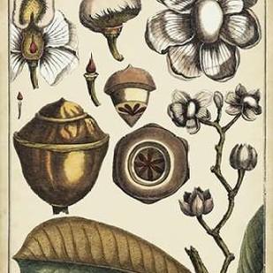 Ivory Botanical Study VI Digital Print by Vision Studio,Decorative