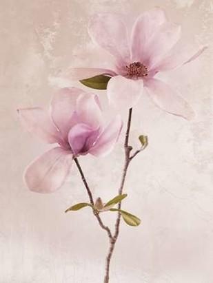 Tulip Blush II Digital Print by Zalewski, Christine,Realism