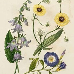 Garden Pairings V Digital Print by Edwards, Sydenham,Realism