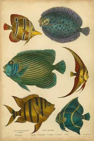 Goldsmiths Spinous Fishes Digital Print by Goldsmith,Decorative