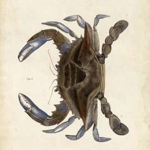 Vintage Crab II Digital Print by Dekay,Decorative
