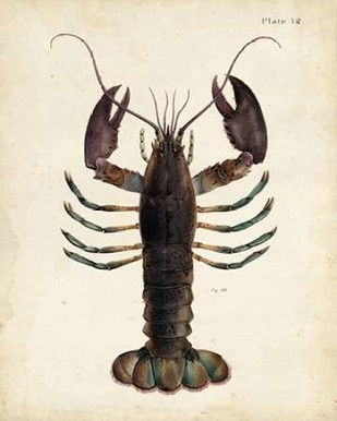 Vintage Lobster Digital Print by Dekay,Decorative