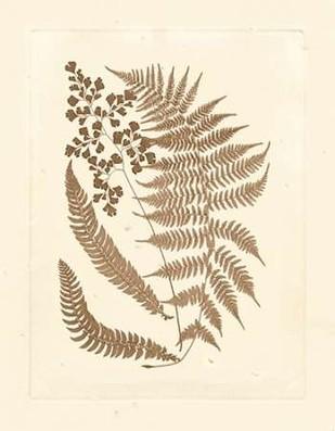 Sepia Ferns III Digital Print by Vision Studio,Decorative