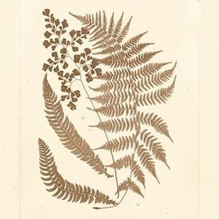Sepia Ferns III Digital Print by Vision Studio,Decorative