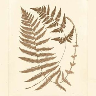 Sepia Ferns V Digital Print by Vision Studio,Decorative