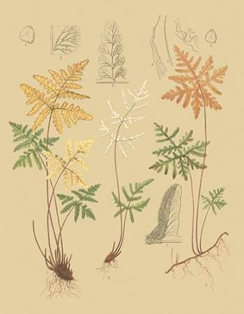 Natures Lace I Digital Print by Faxon, C.E.,Decorative