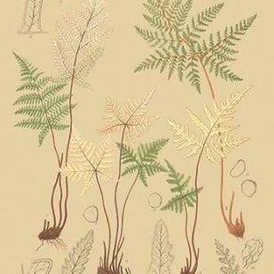 Natures Lace II Digital Print by Faxon, C.E.,Decorative