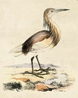 Antique Heron I Digital Print by Unknown,Traditional